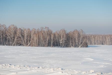 Birch forest in winter. Birch in the snow. Winter forest. Siberian forest. Birch Stok Fotoğraf - 116782997