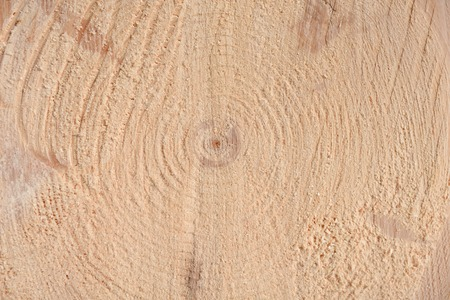 The texture of the end of the tree. Saw cut wood close up. Rough-wood on floors.The end of the tree.