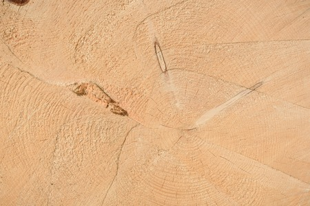 The texture of the end of the tree. Saw cut wood close up. Rough-wood on floors. The end of the tree.