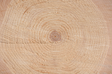 The texture of the end of the tree. Saw cut wood close up. Rough-wood on floors, the end of the tree.