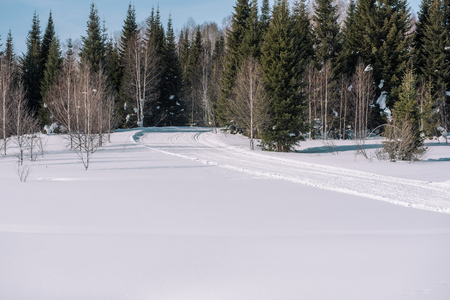 Taiga in the winter. Forest in winter. Closeup of winter forest. Conifers under the snow. Siberia forest in winter. Stok Fotoğraf