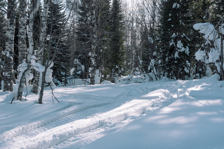 Road in the winter forest. Winter forest. Trees in the snow near the road. Winter forest. Christmas trees in the snow. Winter in Siberia