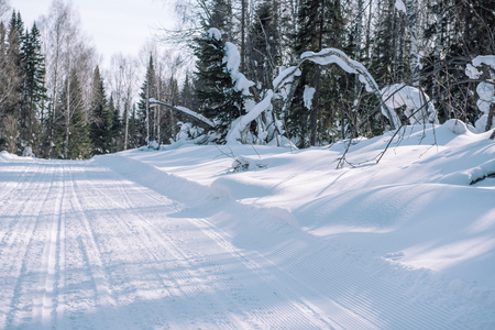 Winter road in the forest. Winter landscape. Trees in the snow along the road. Winter in Siberia