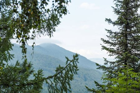 View of the mountain. Watch the mountain from the forest. Mountain Altai. Holidays in the mountains. Landscape of beautiful nature. Admire the beauty of the mountains. Mountains among pine trees.