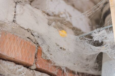 spider web on the wall. gossamer web on the wall. old wall. Archivio Fotografico - 135698848