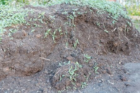Humus in the garden. Natural fertilizers. Grow vegetables on the site. Agriculture. Organic fertilizer. Brown heap