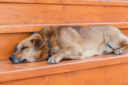 The dog is sleeping on the street. The dog is resting during the day. Tired. Favorite pet. Street dog. Beautiful animal. Friend of human