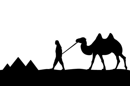 Man with camel of the pyramids. Vector