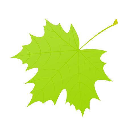 feuille arbre dessin feuille drable verte sur un fond blanc illustration