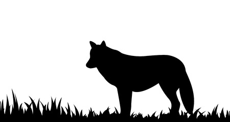 Silhouette of wolf in the grass.