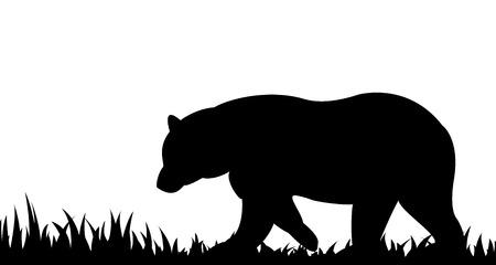 oso negro: Silueta del oso en la hierba. Vectores