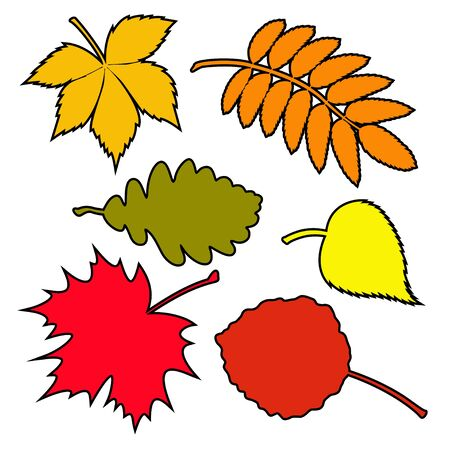 Set of autumn leaves. Vector