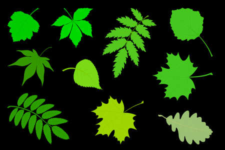 Vector illustration the Set of green leaves. 向量圖像