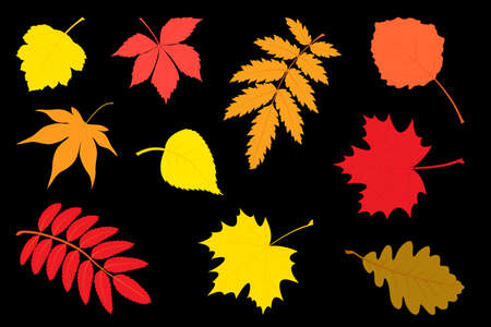 Set of autumn leaves. The vector illustration.