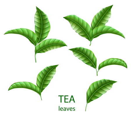 Set of realistic green tea leaves isolated. Green tea for your design, advertising and packaging. Vector floral elements EPS 10