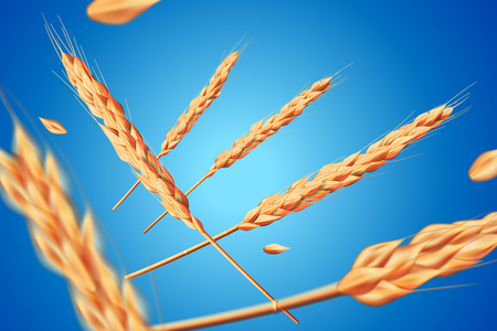 Realistic wheat oats elements. Flying detailed barley isolated on blue background for Healthy food or agriculture design. Vector 3d illustration EPS 10