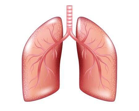 Human Lung cancer diagram isolated. Respiratory illness cancer graphics. Realistic Lung anatomy. Vector illustration