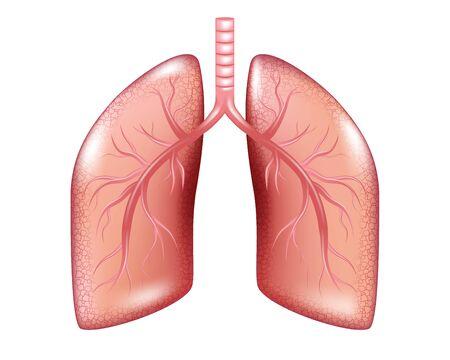 Diagramme de cancer du poumon humain isolé. Graphiques du cancer des maladies respiratoires. Anatomie pulmonaire réaliste. Illustration vectorielle