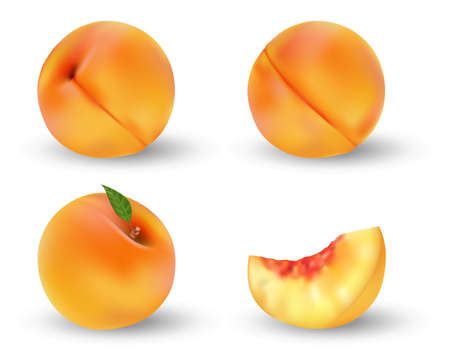 Realistic ripe peach fruit isolated on white. Whole and cut in half orange peach with seed and green leaf. Vector illustration. Ilustracja