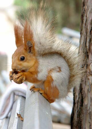 The squirrel Stock Photo - 2584001