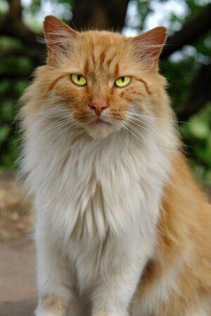 Cat-tiger Stock Photo - 2584002