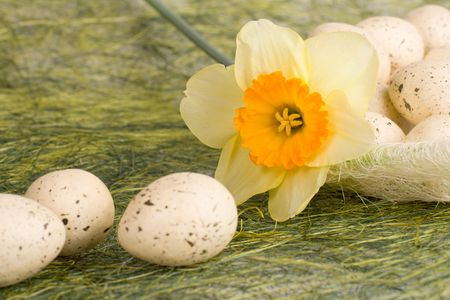 Full basket with decorated speckled easter eggs and daffodil photo