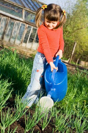Little girl is watering onion from can on the vegetable garden in spring photo
