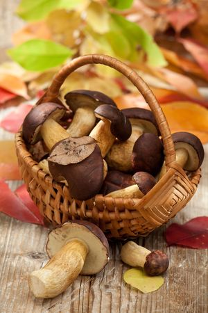 Group of woods edible mushrooms in woven basket on the wooden country table with autumn yellow abscissed leaves on the background Stock Photo