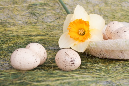 Daffodil and decorated speckled easter eggs photo