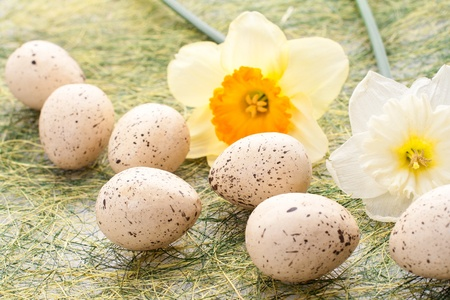 religious habit: Daffodil and decorated speckled easter eggs Stock Photo