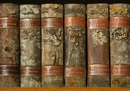 book binding: Xylotheca collection of wooden old books at the shelf in library
