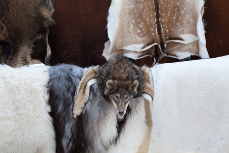 poach: Wild animal fur skins of killed deers, goats and wolf head selling at craft market Stock Photo