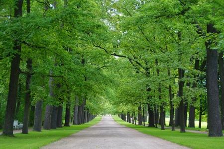 by catherine: Green alley in the Catherine Park in Tsarskoye Selo