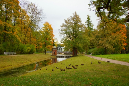 Duck walks in the Catherine park in Tsarskoye Selo