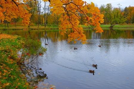 Autumn morning in the Alexander park in Tsarskoye Selo Stock Photo