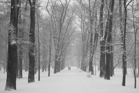 winter road: Walk in the snowstorm, January day in Catherine Park in Tsarskoye Selo
