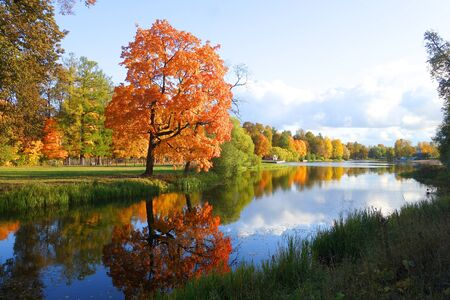 Morning walk in a separate park in Tsarskoye Selo, autumn landscape and a tree by the pond