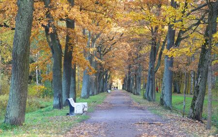 Morning walk in a separate park in Tsarskoye Selo, autumn landscape and a beautiful alley