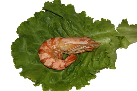 Boiled shrimp laid on a leaf of lettuce on a white background shot