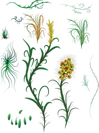 various plants on a white background for design