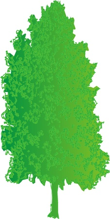 green tree on a white background for design