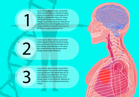 A medical banner with information, on the background of a person and formulas of DNA, scanning of the human body, brain, heart, lungs, blood vessels, in a flat style. Illustration