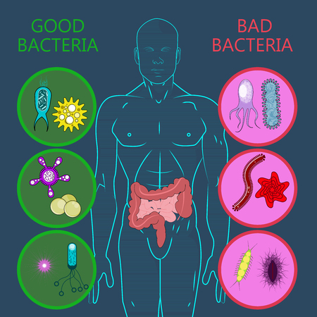 Intestinal flora, Set of good and bad enteric bacteria, micro flora, viruses in Intestine. Large intestine for info-graphic in flat style. Vector illustration, cartoon character design.  イラスト・ベクター素材