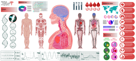 Human Anatomy, Body With Internal Organs. Medical Infographic Set. Illustration of Heart Scan, Human Body, Electrocardiogram, DNA, Arteries and Bervous System. Medical Infographic Vector Illustration Illustration