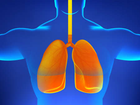 X-ray human body with sick lungs, pneumonia, virus, asthma or other diseases associated with the human lungs. 3D human body hologram and orange lungs signifying illness or infection. Vector healthcare