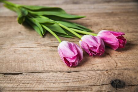 Flowers. tulips on a wooden background with space for text photo