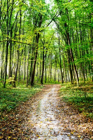 scary forest: road through a scary forest at summer near a resting place Stock Photo