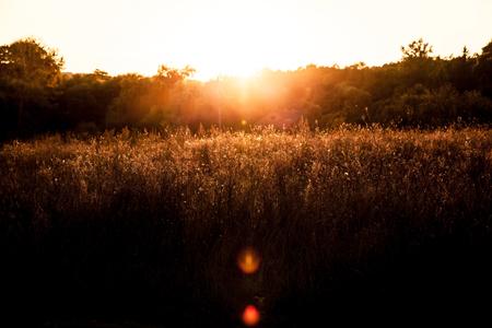 ambrosia: Erbaccia Ambrosia nella splendida luce del tramonto, rurale scena, sfondo zen