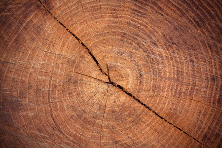 felled: a felled tree as background Stock Photo