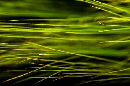 scenic landscape: Scenic landscape with ears of barley close-up